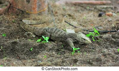 lizard in forest