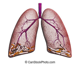 smoker's, lungs, white, background