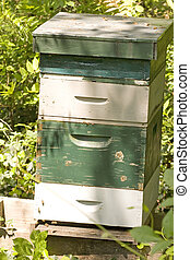 Bee House - A green and white striped bee house in a forest