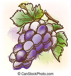 Grape, watercolor painting - Grape. Original vector...