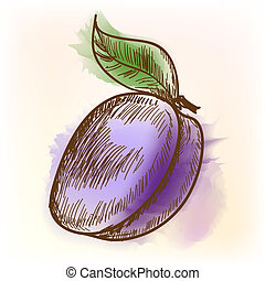 Plum, watercolor painting - Plum. Original vector...