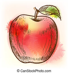 Red apple, watercolor painting - Red apple Original vector...