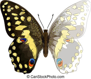 Butterfly Papilio Demodocus. Unfinished Watercolor drawing imitation. Vector illustration.