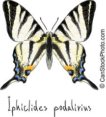 Butterfly Iphiclides Podalirius. Unfinished Watercolor drawing imitation. Vector illustration.