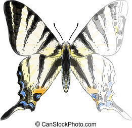 Butterfly Iphiclides Podalirium. Unfinished Watercolor drawing imitation. Vector illustration.