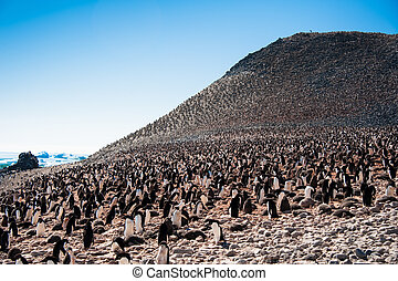 Huge colony of penguins - This shot was made during...