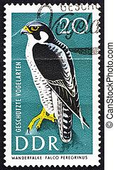taxa postal,  gdr, selo,  1967,  peregrine, presa, Falcão, pássaro