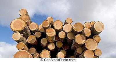 Log Pile and Sky