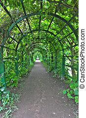 Green archway in a garden. Peterghof.St.Peterburg