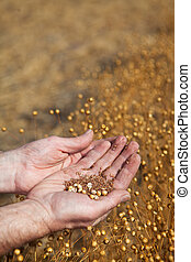 Hands holding flax