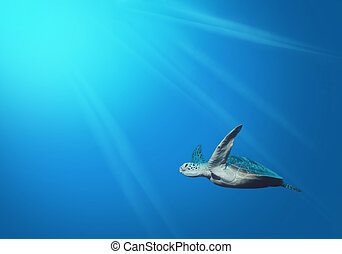 Under the sea - Wallpapers pictures underwater marine life.