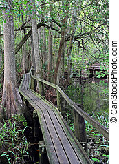 Cypress Swamp Boardwalk - Highlands Hammock State Park, near...