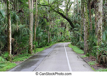 Loop Road - Highlands Hammock State Park, near Sebring,...