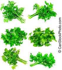 Collage of Fresh parsley on white. Isolated - Collage...