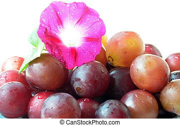 Grapes with a flower - Ripe purple grapes with morning glory...