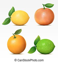 Collection of fruits on white background Mesh
