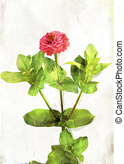 Watercolored coral red zinnia - Illustration of watercolor...
