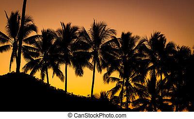 Palm tree at beautiful sunset