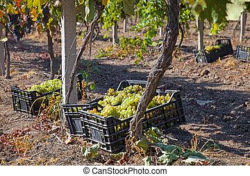 a, 酒, 葡萄園, 法國