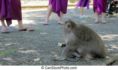 monkeys in uluwatu temple, bali