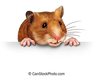 Cute Hamster - Cute hamster smiling and happy holding a...