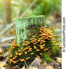Mushrooms growing on hemp in deaf wood