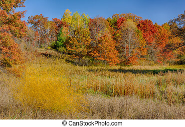Autumn in Full Color - Autumn in Fall Color at the Marsh
