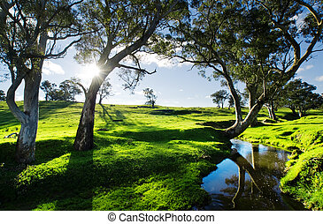 Country Stream - Adelaide Hills Landscape
