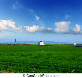 green rice fields in El Saler at Valencia Spain in sunny...