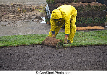 man laying sod in the rain