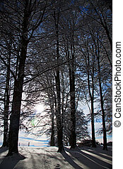 Winter forest - Snowy trees with shadows, sun shining from...