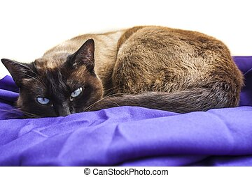 cat sleeping on blue cloth