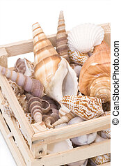 Crate of Sea Shells - Small wooden crate with an assortment...