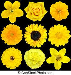 cobrança, nove, amarela, flores, isolado, pretas