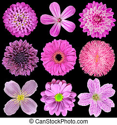 Various Pink, Purple, Red Flowers Isolated on Black...