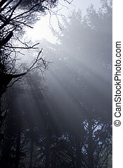 Forest Sunlight - Scenic view of rays of sun beaming through...