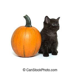 Cute black kitten and pumpkin - Cute baby black cat sitting...