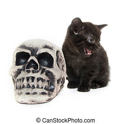 Black kitten with skull - Cute black kitten with decorative...
