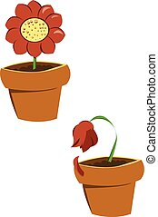 pots of flowers - two flowers, the first one is a nice...