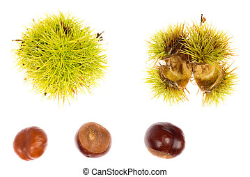 Chestnut in husk - Series of chestnut in husk against a...