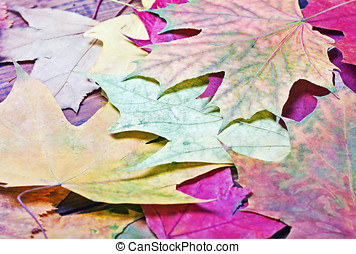 Colorful background of fallen autumn leaves