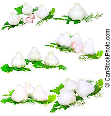 Garlic, decorating of parsley. Isolated over white