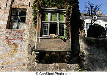 Dog in the window on canal in Brugge, Belgium - Dog in the...