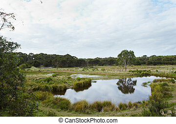 Wetlands area in Australia