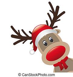 reno, rojo, nariz, santa, Claus, sombrero