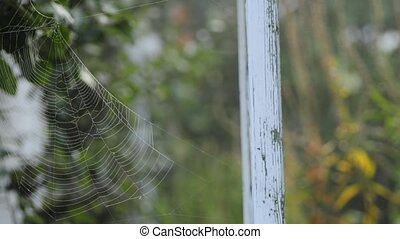 spider web in a garden