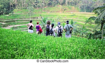 tourists in rice terrace, bali