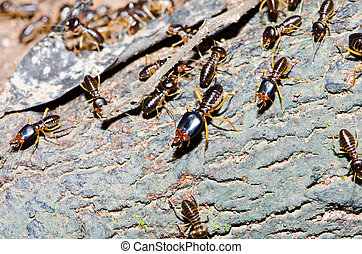 Group of termite wood eater in tropical rain forest