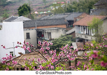 China Village Blossom