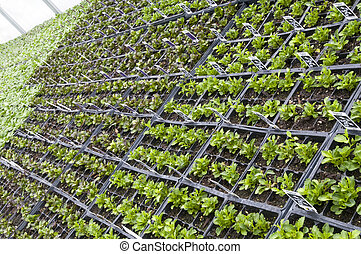 Rows of Potted Plants - Rows of Small Potted Plants at a...